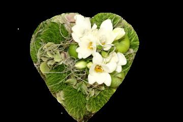 # 56 Hart Dianthus